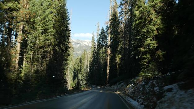Вождение автомобиля в лесу секвойи перспективный вид из автомобиля большие хвойные деревья красного дерева и проезжая часть возле дороги кингс-каньон в национальном парке северной калифорнии, сша, автостоп