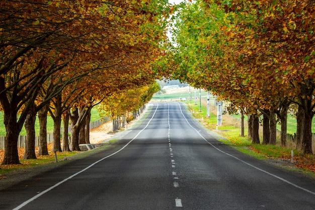 Езда по шоссе через аллею осенних дубов