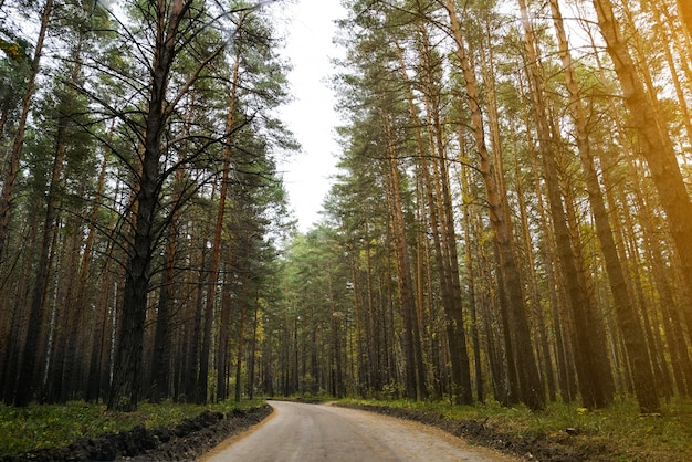 Driving road through the forest on a summer day, through the trees, near the place of rest.