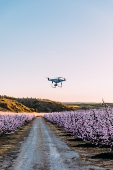 Dron flying over field of flowers