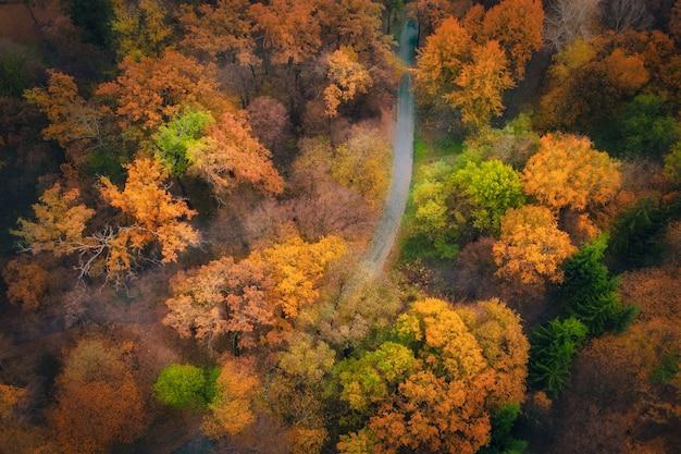 ドローン美しい秋の森の道路の空撮。空の田舎道、オレンジと緑の葉のある公園の木々のある映画のような風景。飛行ドローンから撮影した上面図。