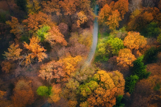 Drone aerial view of road in beautiful autumn forest. cinematic landscape with empty rural road, park trees with orange and green foliage. top view shot from flying drone.