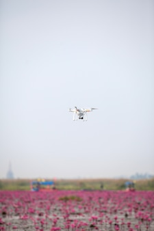 핑크 로터스 호수에 떠오르게하는 무인 항공기 항공기