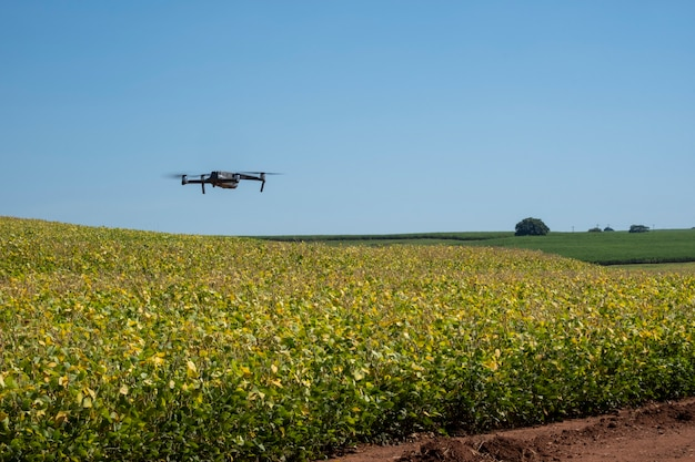 Drone flying over soy plantation on sunny day in brazil.