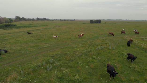 牛の木の群れを背景にした川と緑の野原の戸外のドローン写真