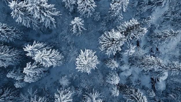 Снимок с дрона заснеженных вечнозеленых деревьев после зимней метели в литве.