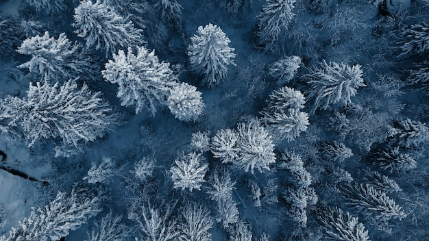 Drone photo of snow covered evergreen trees after a winter blizzard in lithuania.