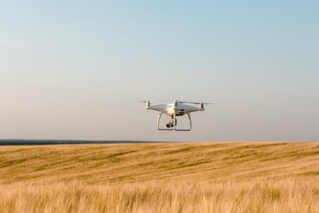 Drone quadcopter on green corn field