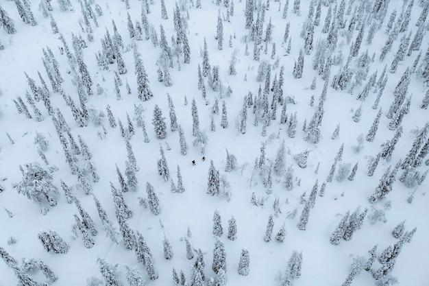 フィンランド、ラップランドの雪に覆われた森をトレッキングする人々のドローンショット