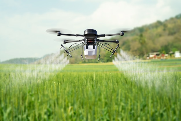 Drone spraying pesticide on wheat field