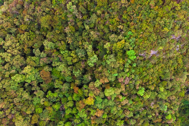 Drone view of green rain forest in asia