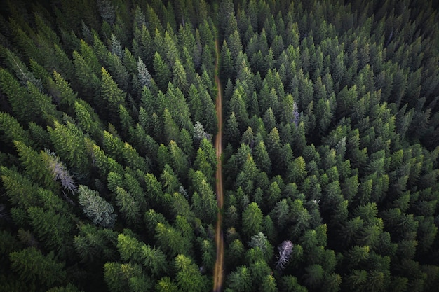 Drone view of a greenery forest with a dirt road