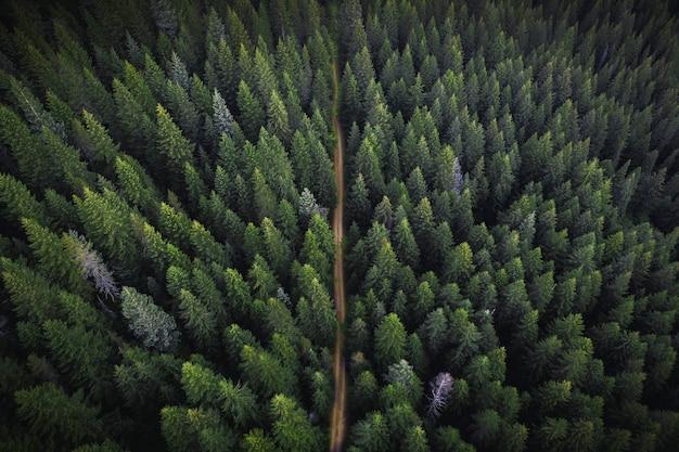 비포장도로가 있는 녹음이 우거진 숲의 드론 보기