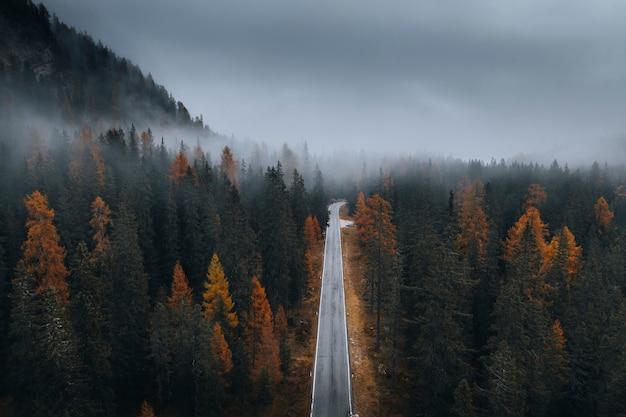 가을 안개 낀 침엽수 림의 무인 항공기보기