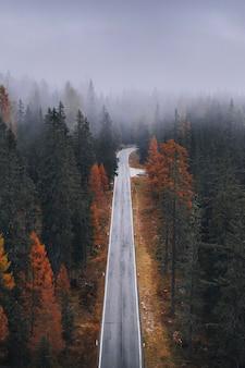 가을에 안개 낀 침엽수림의 드론 보기