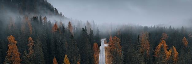 秋の霧の針葉樹林のドローンビュー