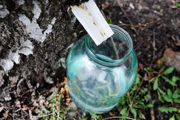 Drop of birch sap dripping into a glass jar