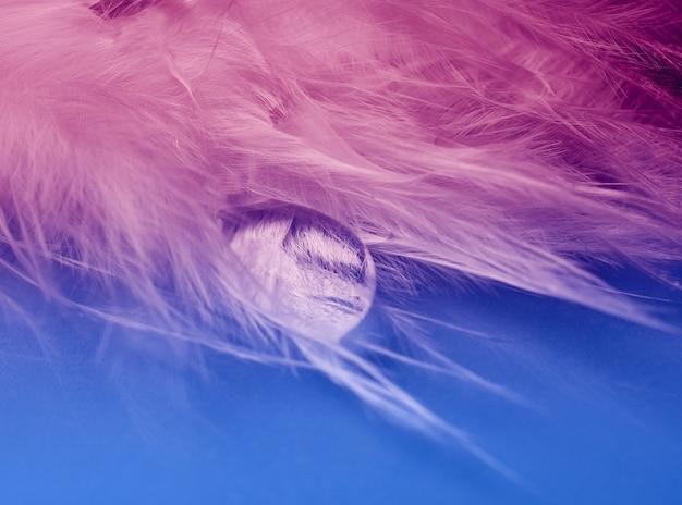 羽を流れる水滴