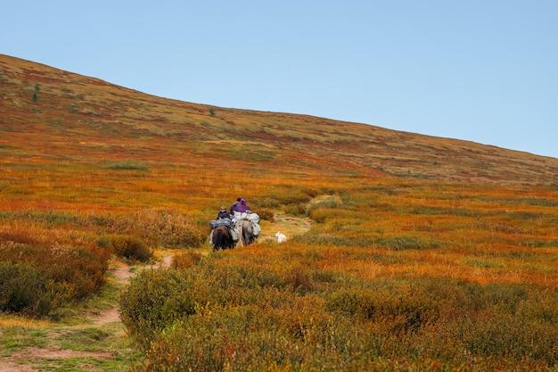 Высадка туристов на лошадях. небольшой караван на коне с белой собакой по тундре с зарослями карликовой березки спускается с холма вдали.