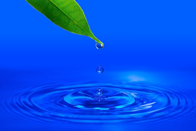 A drop of water falling from a green leaf into the water