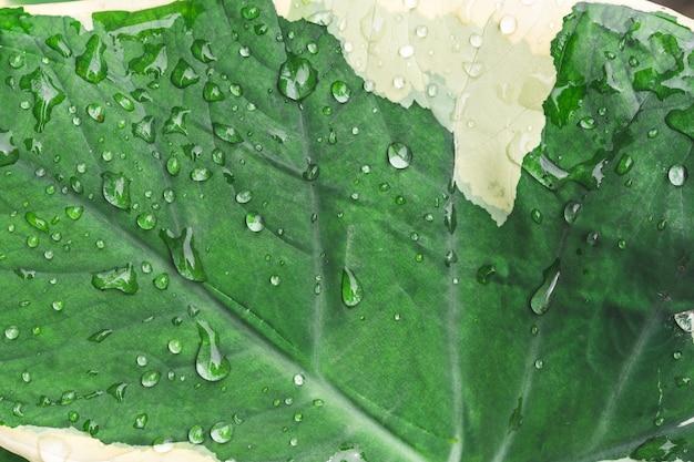 Drop water on tropical leaf