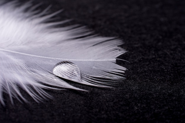 Drop of water on a white feather on black
