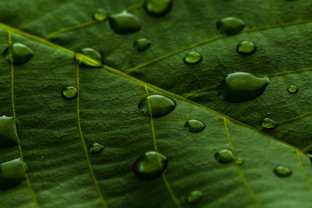 Droplets of green plant leaf