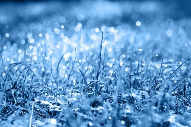 Drops of dew on a fresh green grass in classic blue trendy color. background. color of the year.
