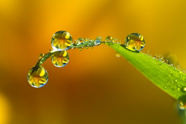 Drops of dew in the grass close up