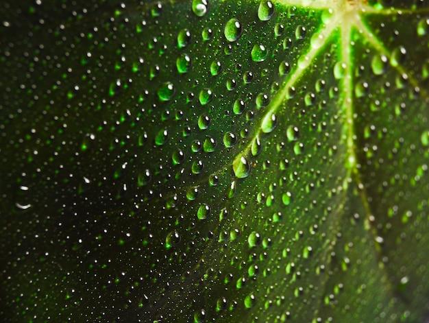 緑の葉に露の滴がクローズアップ。
