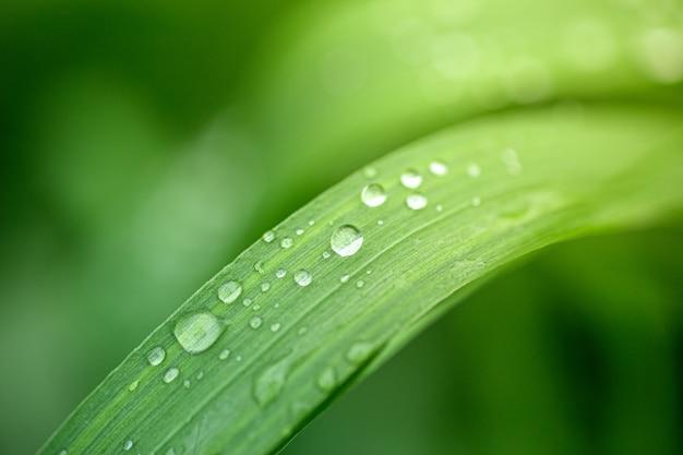 葉に露の滴。森の朝の植物の緑の葉に水滴。リラックスして自然の背景
