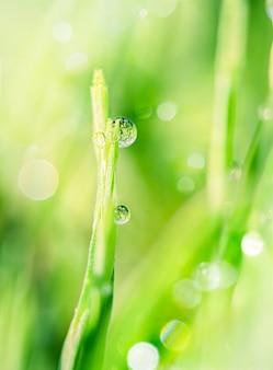 緑の草の茎の朝露のしずくクローズアップ自然の純粋さの素晴らしいイメージ