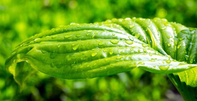 緑の葉に雨のしずく Premium写真