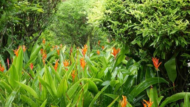물 방울 꽃과 녹색 열대 단풍 관개