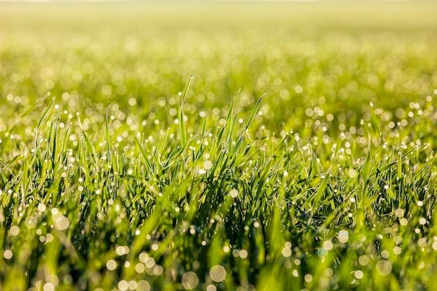 푸른 잔디에 물 방울