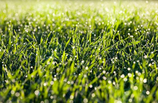 Капли воды на зеленой траве
