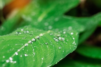 Drops on leaves with the freshness.