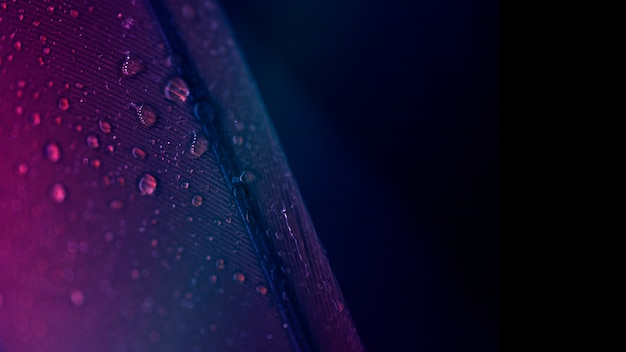 Drops of purple feather surface against black backdrop