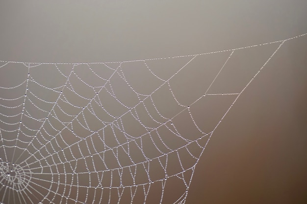 Drops on the spider web in the nature in autumn