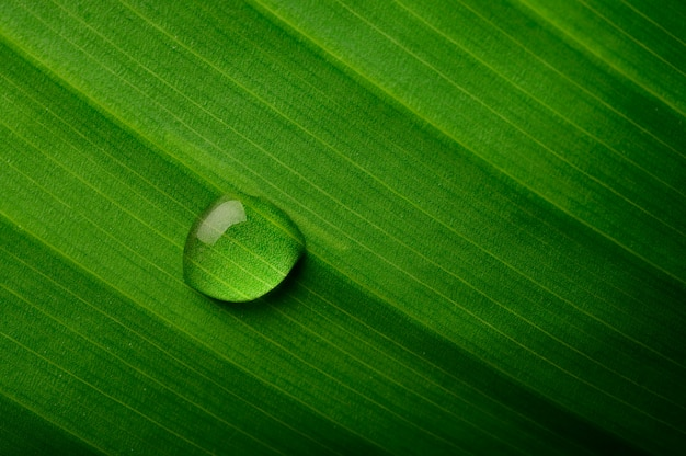 Drops of water falling on banana leaves