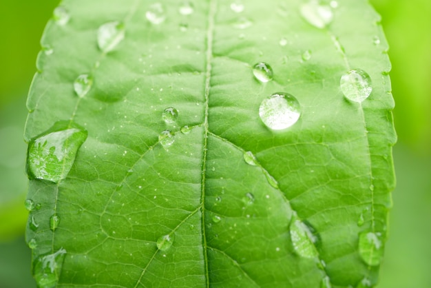 Drops of water on the leaves. green nature