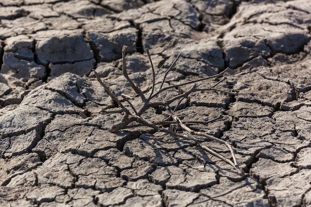Drought.dryed 식물의 가지가 건조한 토양에 태양 아래 놓여 있습니다.