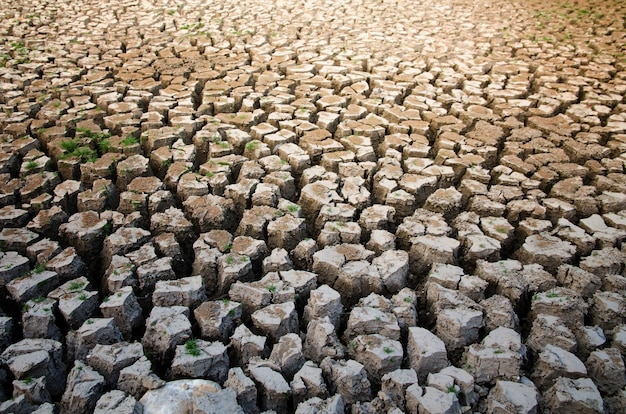 Засухоустойчивый эффект нехватки воды