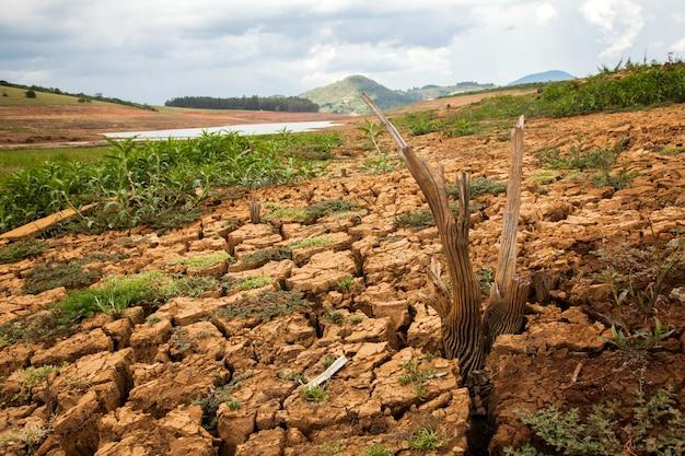 ブラジルのカンタレイラダムの干ばつ土壌