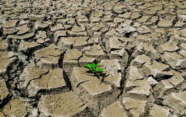 Drought soil tree on the ground of ecology and the environment