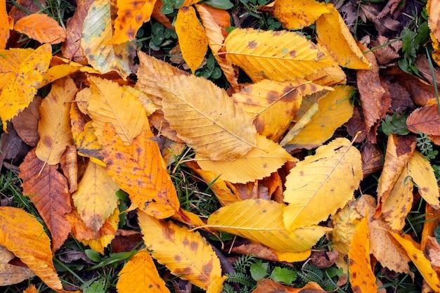 Сухие осенние опавшие листья в лесу на земле