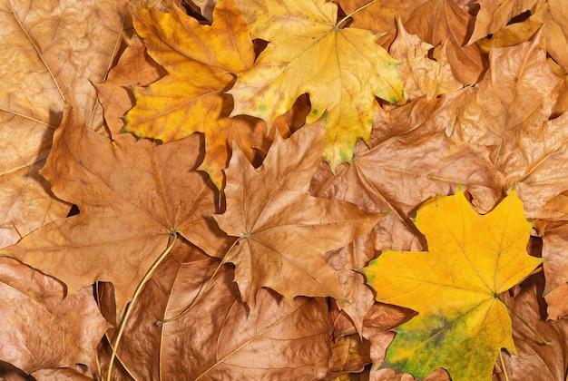 乾燥した紅葉のクローズアップ自然な背景とテクスチャ