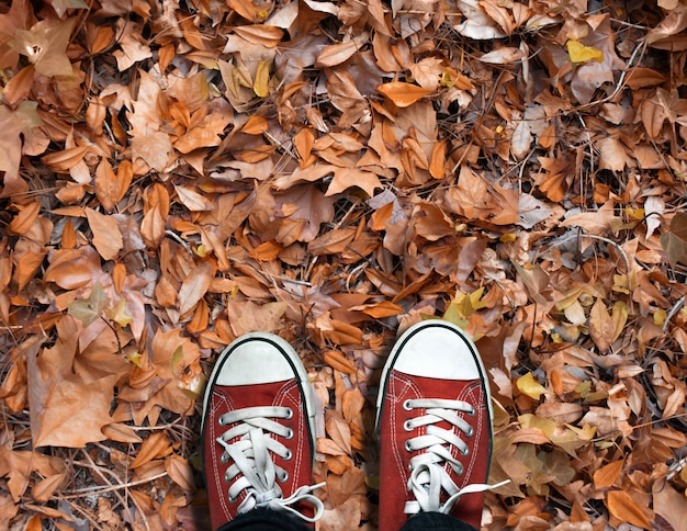 Dry autumn leaves in a forest shoes over dry leaves in autumn
