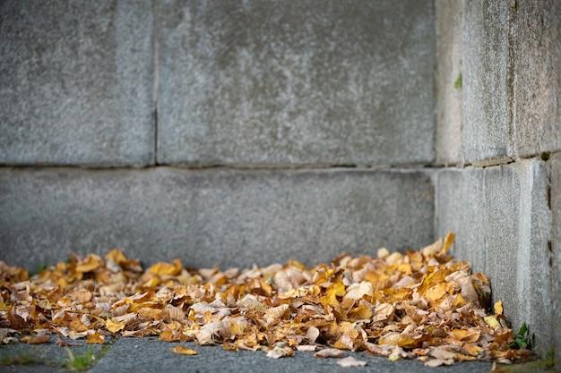 大きな古いレンガのブロックと壁の背景に乾燥した紅葉
