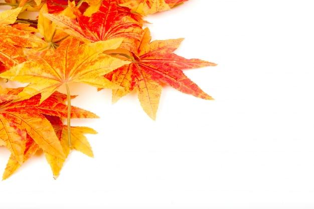 白い背景の上に乾燥した秋の葉